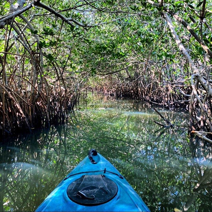 thousand island tour in Cocoa Beach Florida mangrove tunnel